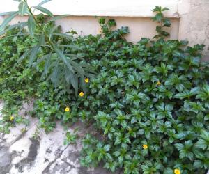 @ my garden