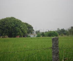 Rangoli: Scenic village