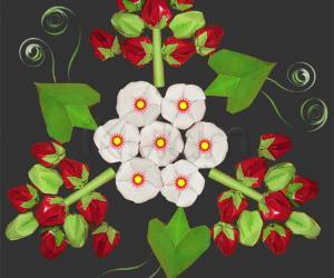 Rangoli: Berries for the veggie garden