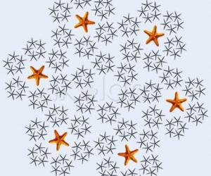 Rangoli: Dance of the starfish