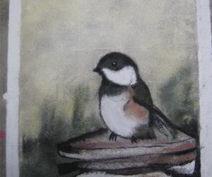 Rangoli: Sparrow