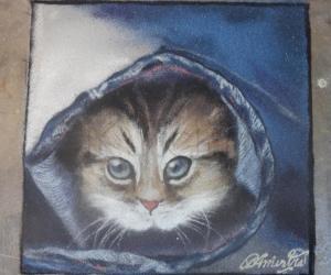 cat inside a jean