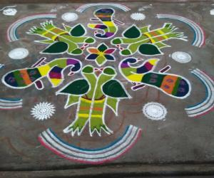 Rangoli: Parrots and peacocks