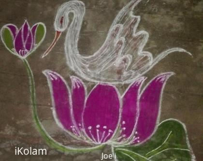Rangoli: Swan with lotus