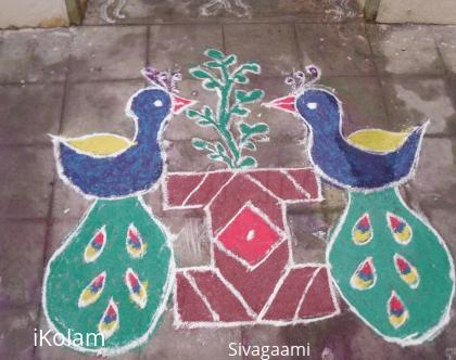 Rangoli: Twin peacock
