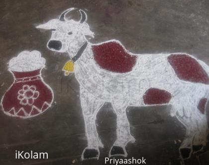 Rangoli: Mattu pongal rangoli