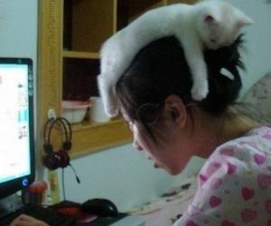 Cat sleeping on head
