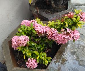 @ mygarden blooms !