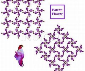 Parrot flower - 1