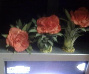 Three natural flower pots kept on TV set