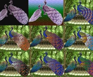 Peacock models