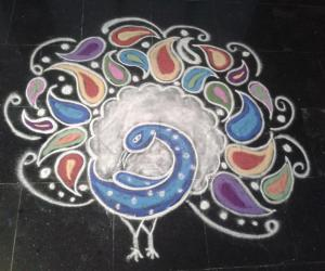 Paisley Peacock rangoli