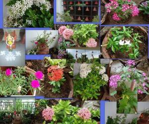 Rangoli: Balcony Garden