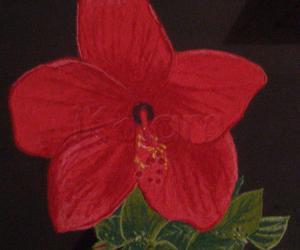 chembaruthi flower