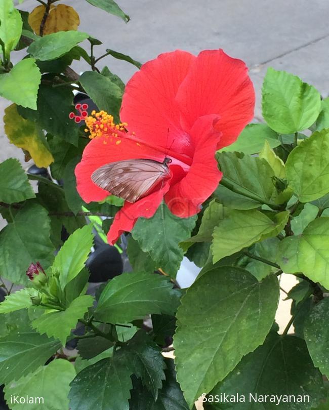 Butterfly in my garden  -