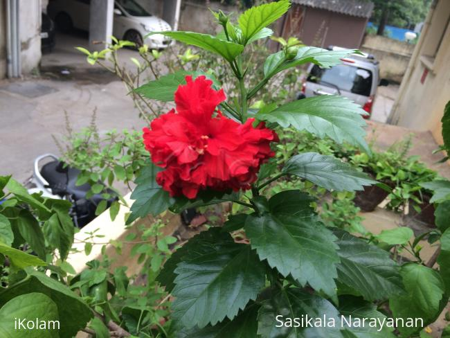 My garden -