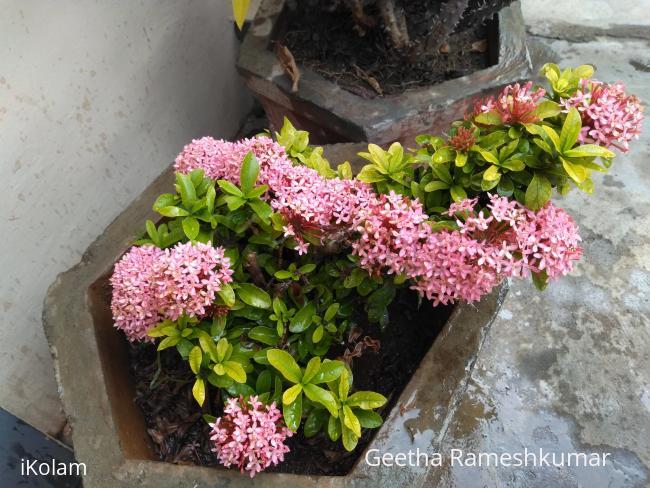 @ mygarden blooms ! -