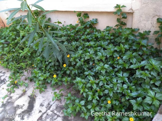 @ my garden  -