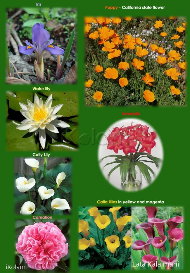 Rangoli: Flowers collage