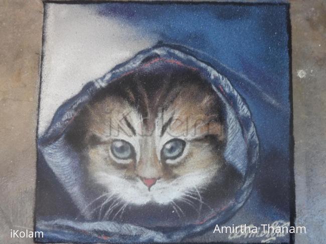 Rangoli: cat inside a jean