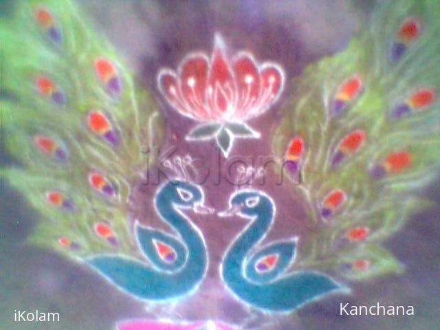 Rangoli: peacock rangoli 2014